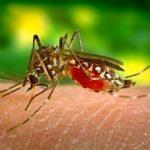 Cómo no contagiarse del virus Zika: evita las picaduras de mosquitos.