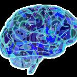 Dormir diez horas y el aceite omega tres, claves para cuidar el cerebro.