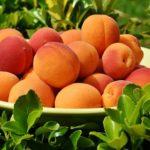 La Junta pone en valor la prevención de riesgos laborales en la agricultura almeriense.